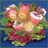 Protea Baskets